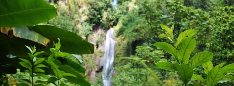 Ausflugstipp: Die Trafalgar Falls von Dominica
