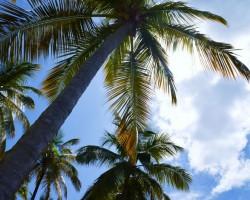 Reisebericht: Transatlantik mit AIDAluna