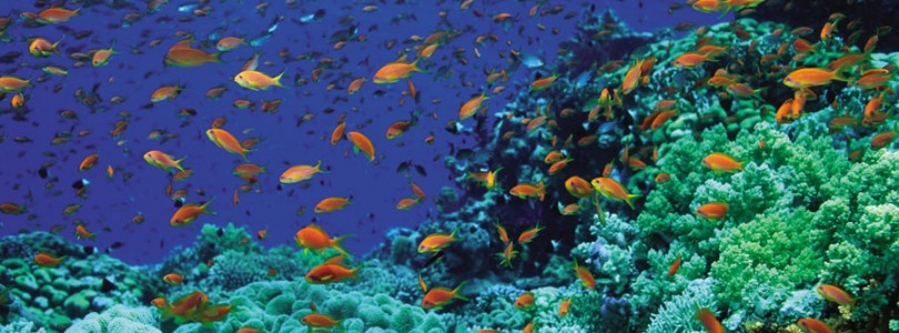 TUI Cruises engagiert sich für Meeresschutz- und Meeresforschung