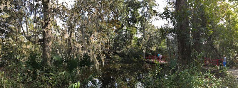 Ausflugstipp: Sümpfe & Gärten: Die Magnolia-Plantage (Charleston)